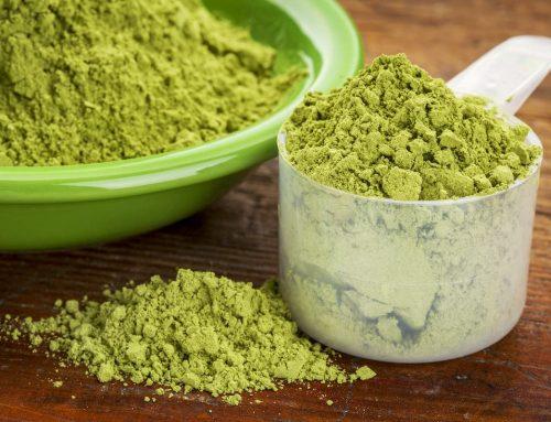 Comment le Moringa est il devenu un super aliment ? L'est t-il vraiment ?